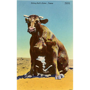 Sitting Bull's Sister Cow Steer Texas Vintage Comic Postcard (unused)