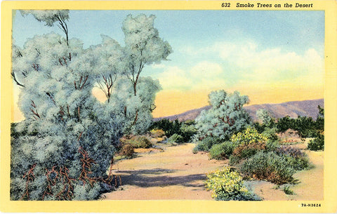 Smoke Trees on Desert Botanical Vintage Postcard (unused) - Vintage Postcard Boutique