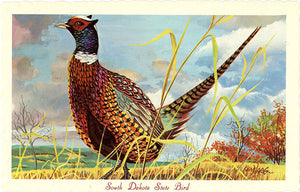 South Dakota State Bird - Chinese Ringneck Pheasant Vintage Postcard Signed Artist Ken Haag (unused) - Vintage Postcard Boutique