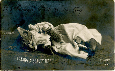 Sleeping Kitten 'Taking A Beauty Nap' Rotograph RPPC Vintage Cat Postcard 1907 - Vintage Postcard Boutique