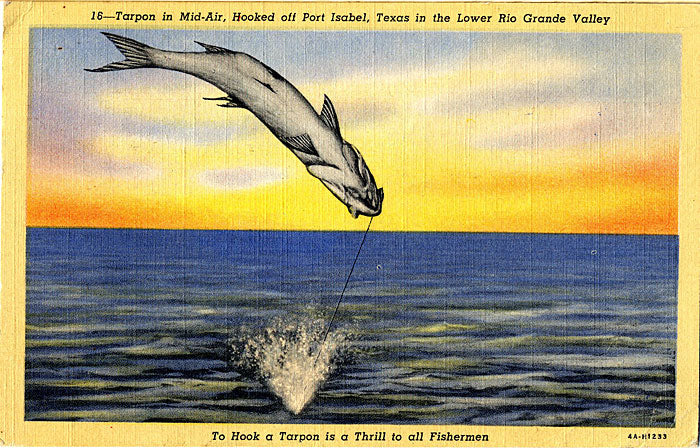 Port Isabel Texas Tarpon in Mid-Air Fishing Vintage Postcard 1947 - Vintage Postcard Boutique
