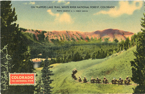 Trappers Lake Trail White River National Forest Colorado Vintage Postcard (unused)
