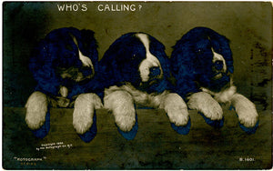 Three Puppies 'Who's Calling?' Rotograph RPPC Vintage Postcard 1906 (unused) - Vintage Postcard Boutique