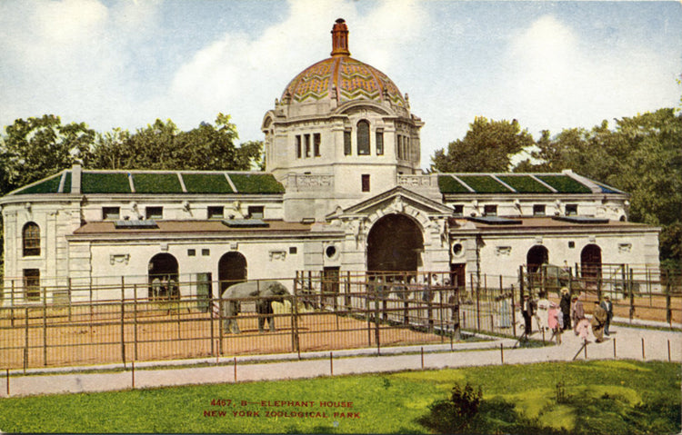Elephant House New York Zoological Park Bronx Zoo Vintage Postcard circa 1910 (unused) - Vintage Postcard Boutique