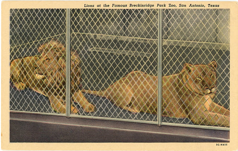 Breckinridge Park Zoo Lions San Antonio Texas Vintage Postcard (unused) - Vintage Postcard Boutique