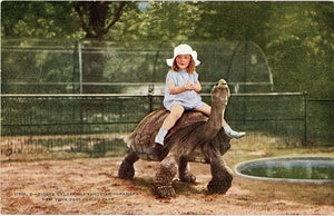 Little Girl Riding Galapagos Tortoise New York Zoological Park Vintage Postcard circa 1910 (unused) - Vintage Postcard Boutique