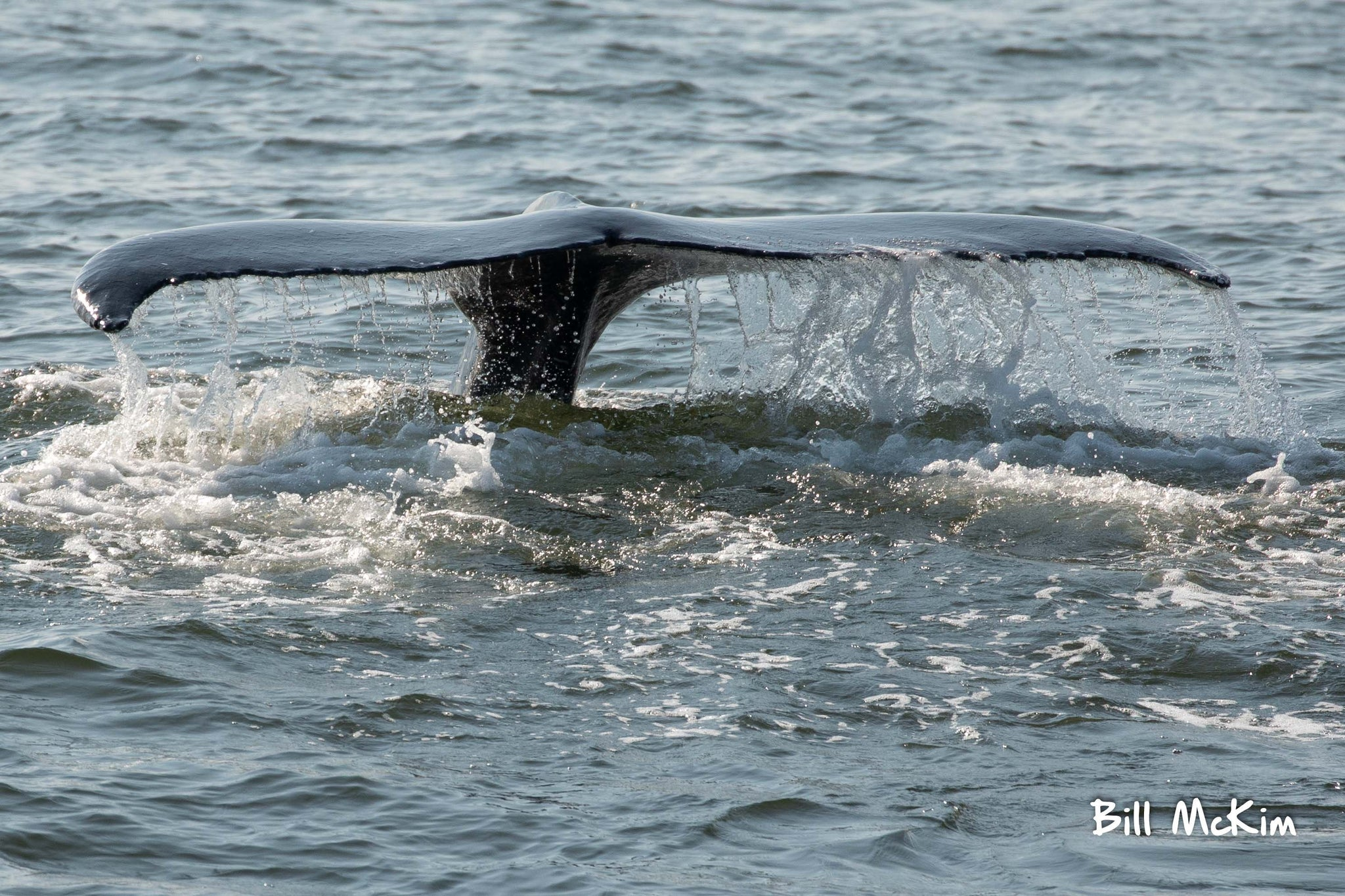 Bill mckim whale watching photos