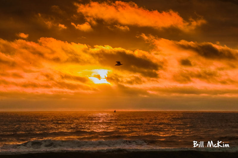 jersey shore photographer bill mckim
