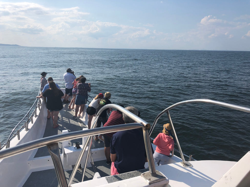jersey shore whale watch trip photos july 2019
