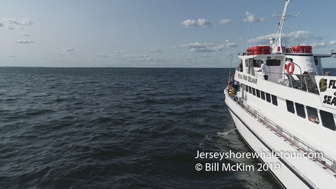 jersey shore whale watching tour bill mckim