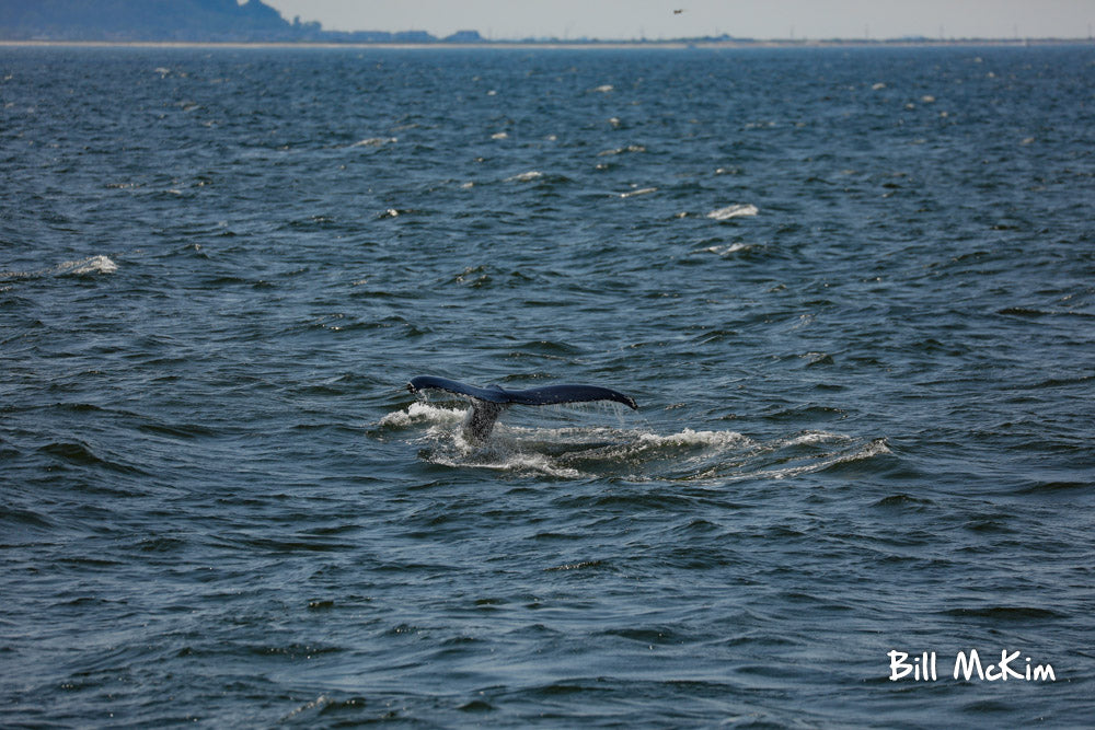 2019 photos whale watching new jersey