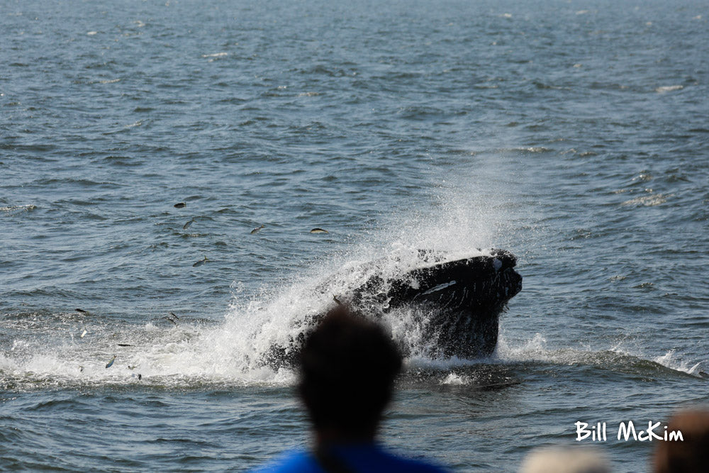 jersey shore whale watching trip