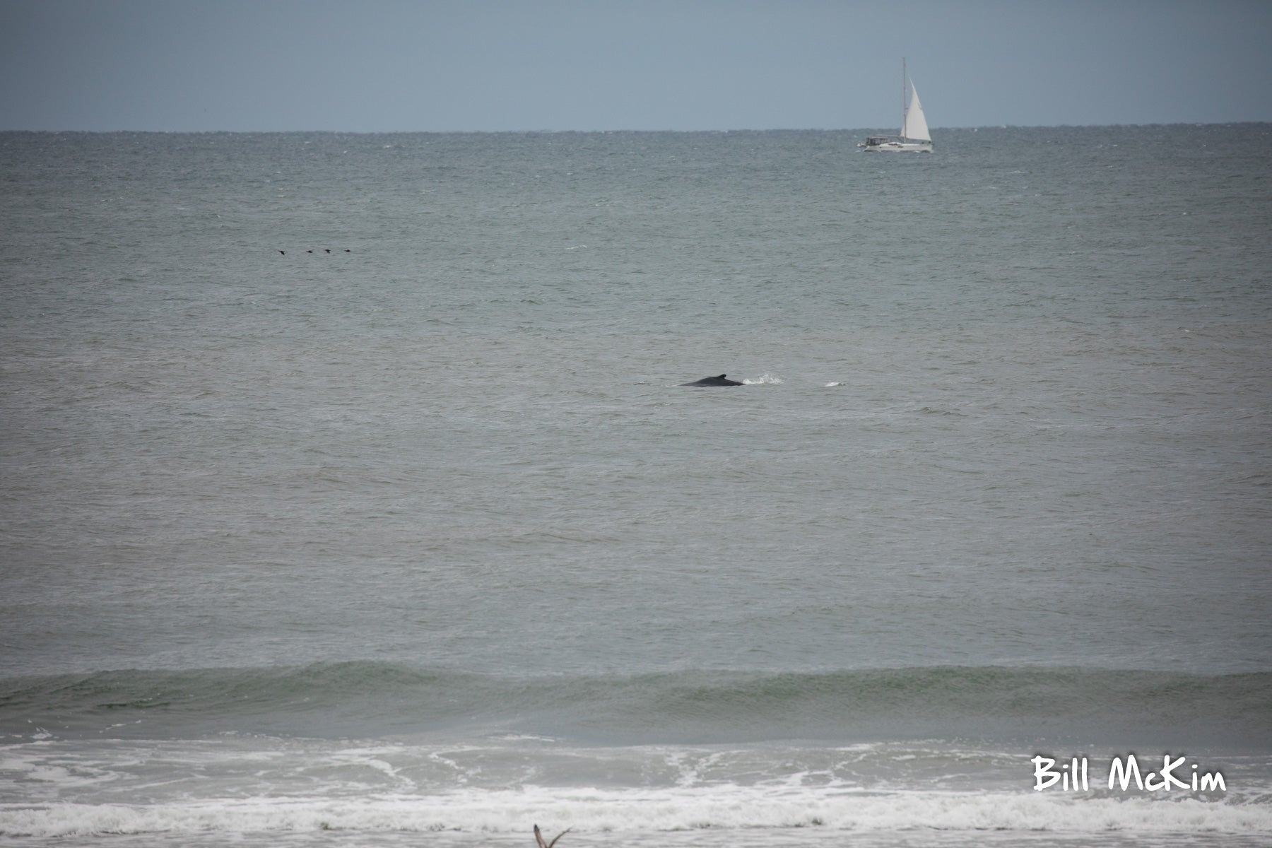 2 Humpback Whales off the coast of Belmar this morning.