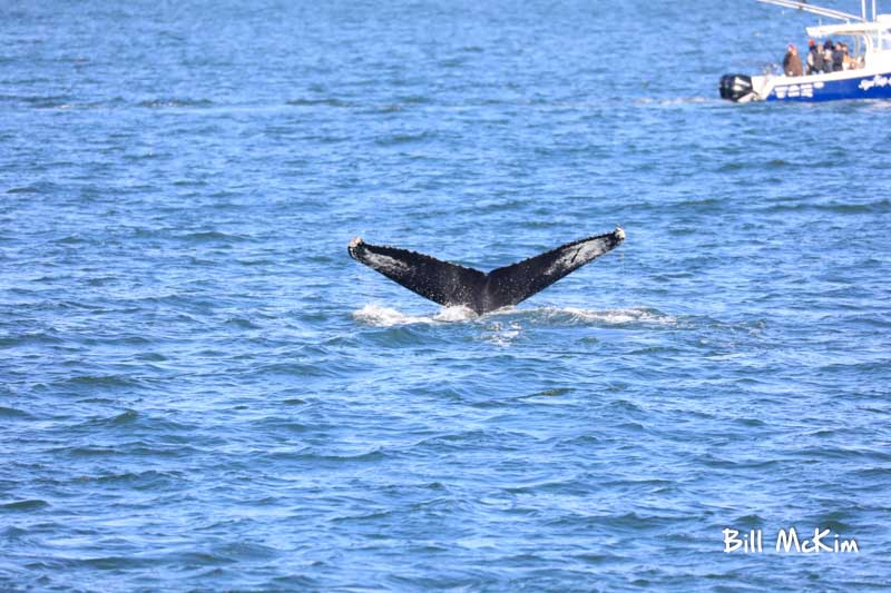 jersey shore whale watching tour bill mckim spring lake nj