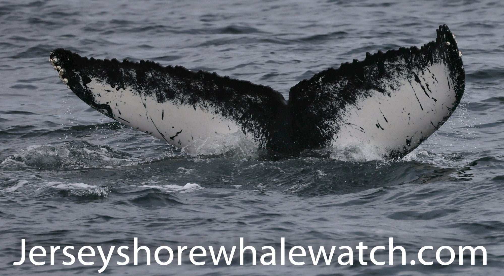 12 Hour Off Shore Whale Watching Adventure Point Pleasant Marina - Bill McKim Photography -Jersey Shore whale watch tours
