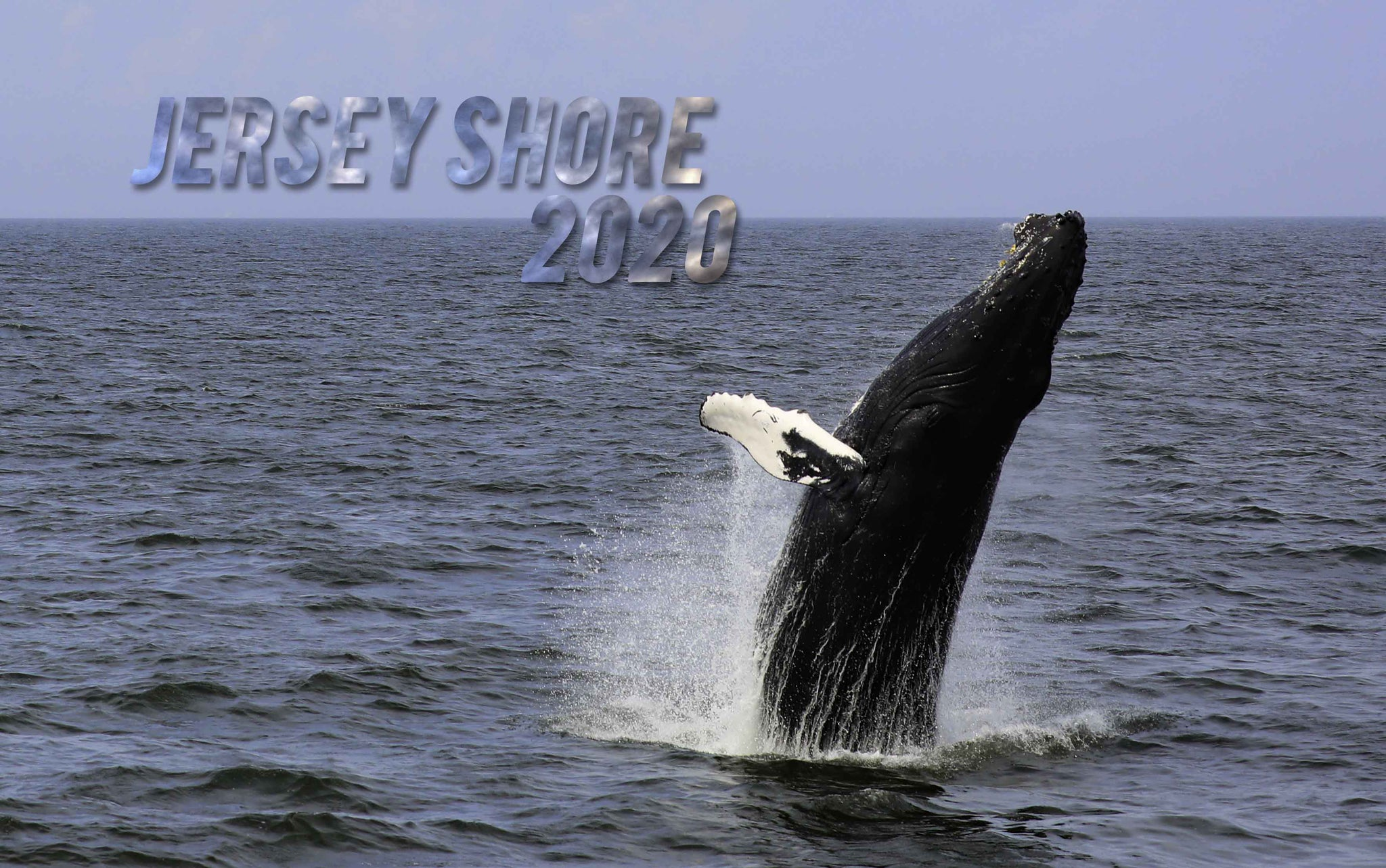 2020 Jersey Shore calendar with bonus  months October 2019 - December 2020