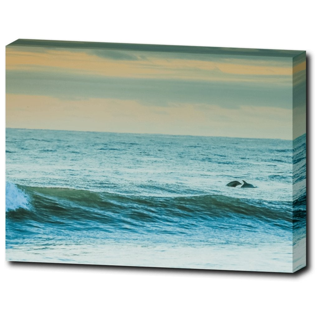 Dolphins off the Coast Canvas Gallery Wrap 12 x16 - Bill McKim Photography -Jersey Shore whale watch tours