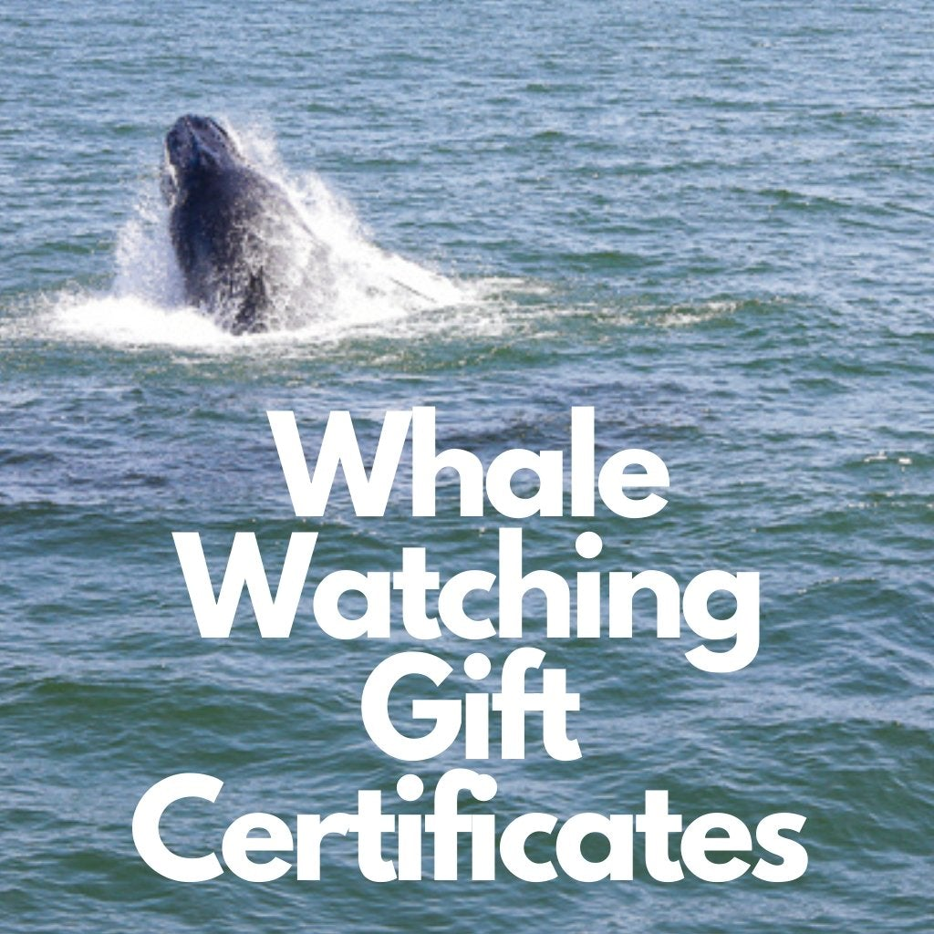 Gift Certificate for Bill McKim Whale Watching Tour - Bill McKim Photography -Jersey Shore whale watch tours