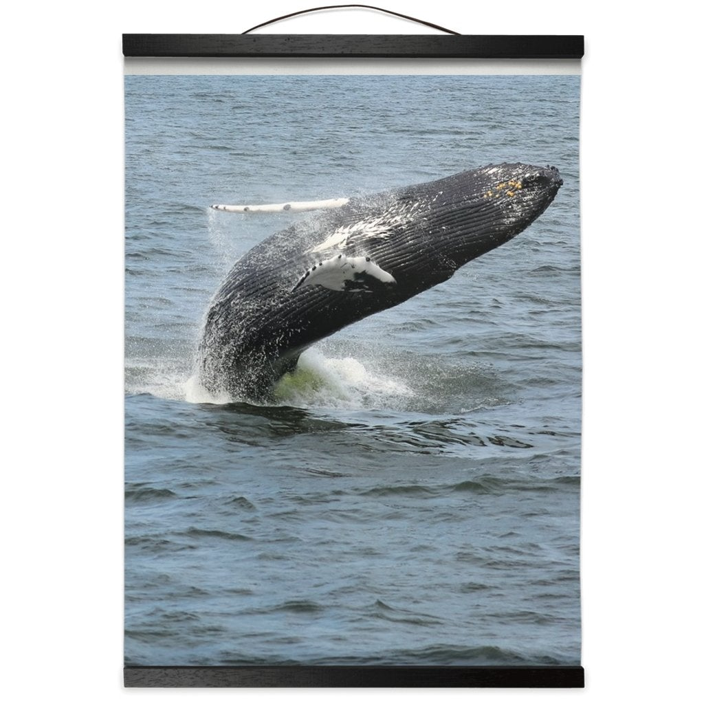 Hanging Canvas Prints Humpback whale Jersey Shore 2019 - Bill McKim Photography -Jersey Shore whale watch tours