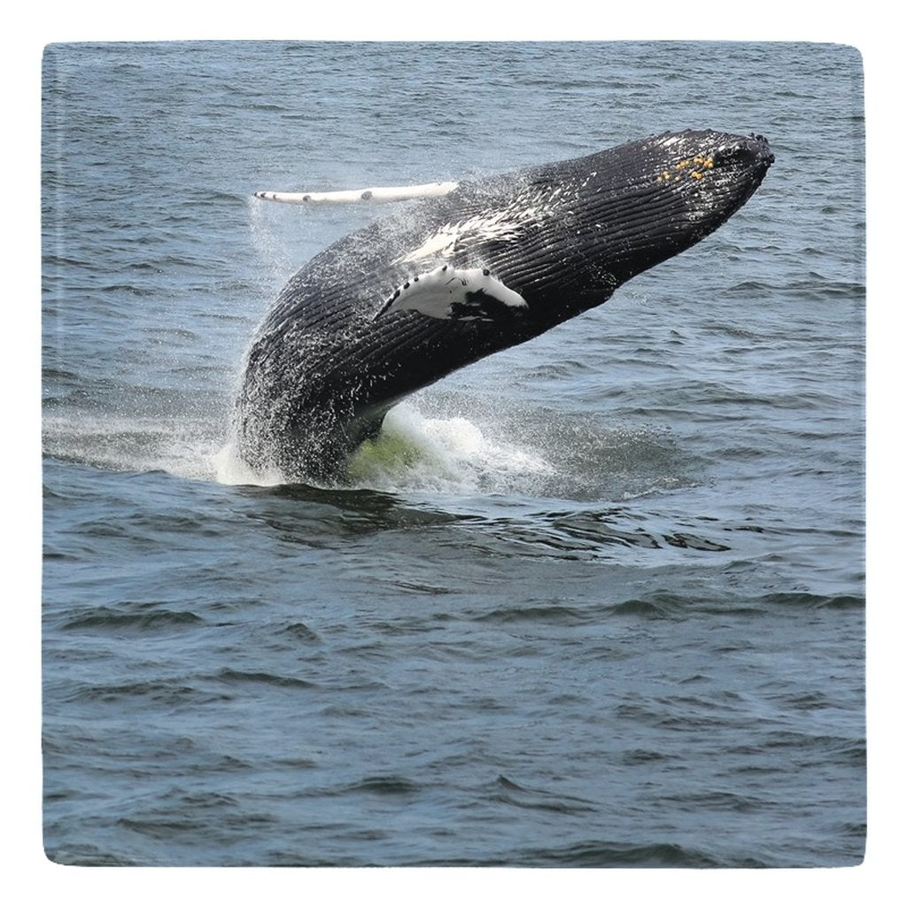 Kitchen Metal Magnets Series 2 - Bill McKim Photography -Jersey Shore whale watch tours