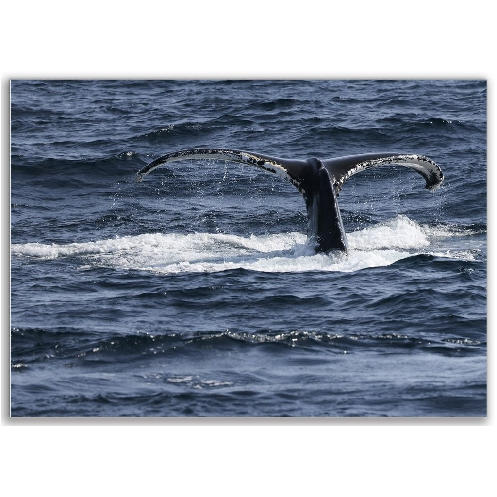 Posters - Bill McKim Photography -Jersey Shore whale watch tours