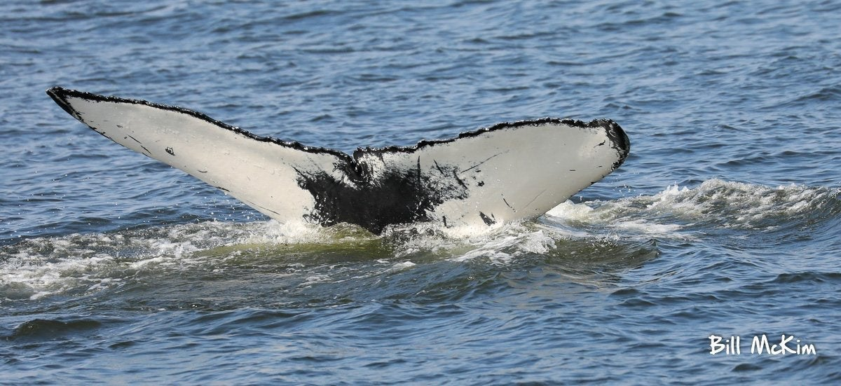 Whale Watching Fundraiser trip deposit - Bill McKim Photography -Jersey Shore whale watch tours
