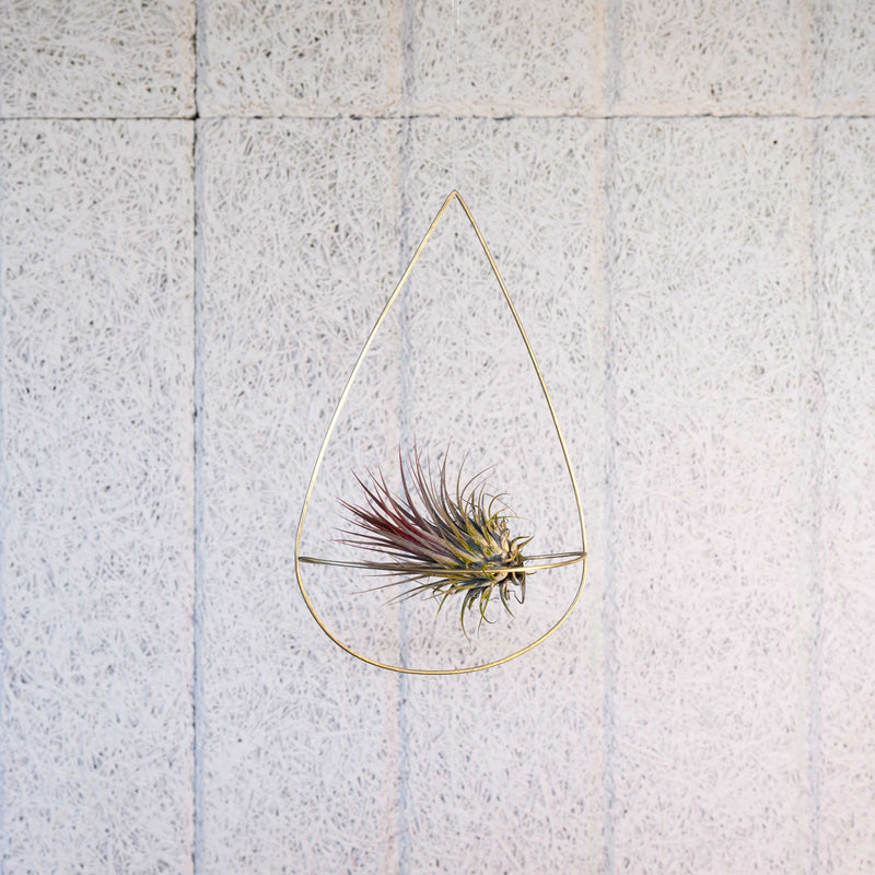 air plant holder with air plant handmade by clare kilgour in brass. made in the uk based jewellery designer