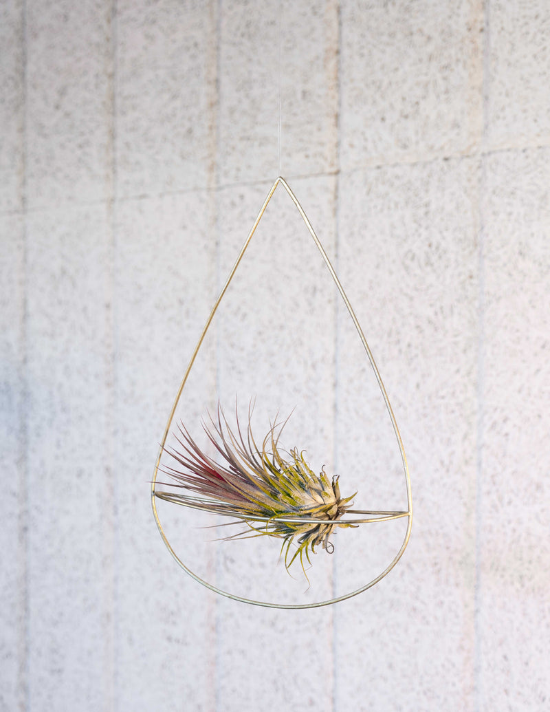 air plant holder handmade by clare kilgour in brass with air plant. made in the uk based jewellery designer