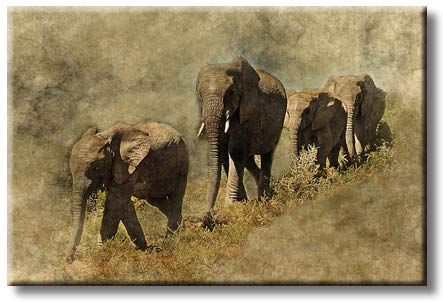 Vintage Elephant Family in Forest Picture on Stretched Canvas, Wall Art Décor, Ready to Hang