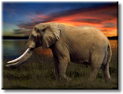 Elephant Walking in Green Grass in The Evening on Sunset Picture on Stretched Canvas, Wall Art Decor, Ready to Hang