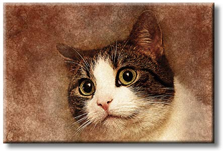 Lovely Cute Cat Picture on Stretched Canvas, Wall Art Decor, Ready to Hang