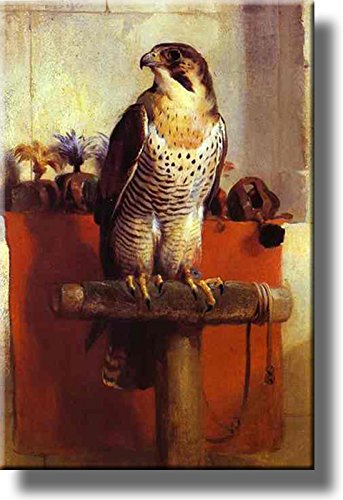Falcon Bird Picture on Stretched Canvas Wall Art Décor, Ready to Hang!