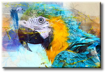 Morden Decoration Parrot Art Picture on Stretched Canvas, Wall Art Decor, Ready to Hang