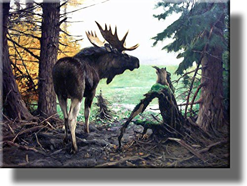Moose in Forest Picture on Stretched Canvas, Wall Art Décor, Ready to Hang!