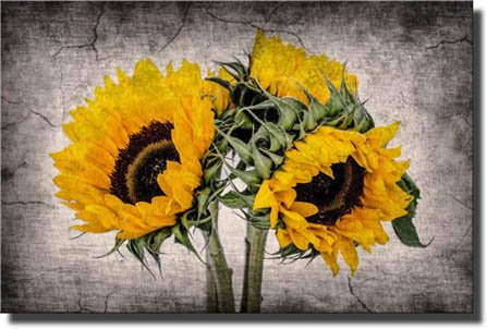 Vase of Sunflowers Painting Picture by Monet on Stretched Canvas, Wall Art Décor, Ready to Hang!