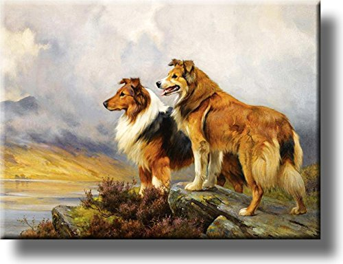Collie Dogs on a Mountain Picture on Stretched Canvas, Wall Art Décor, Ready to Hang!