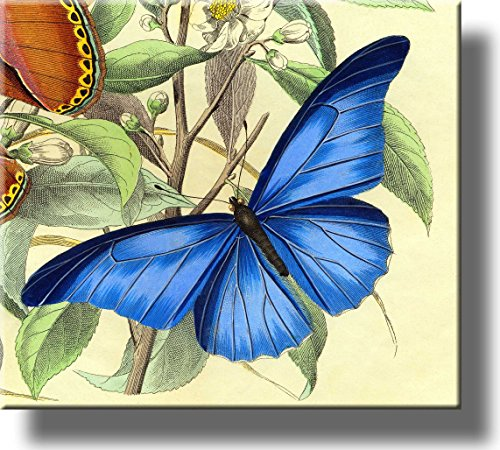 Beautiful Blue Butterfly Picture on Stretched Canvas, Wall Art Décor, Ready to Hang!