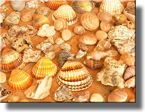 Sea Shells Bathroom Picture on Stretched Canvas, Wall Art Décor, Ready to Hang!