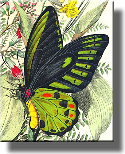 Butterfly on a Leaf Picture on Stretched Canvas, Wall Art Décor, Ready to Hang!