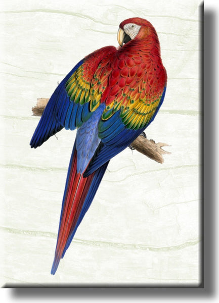 Red Yellow Blue Parrot Picture on Stretched Canvas, Wall Art Décor, Ready to Hang