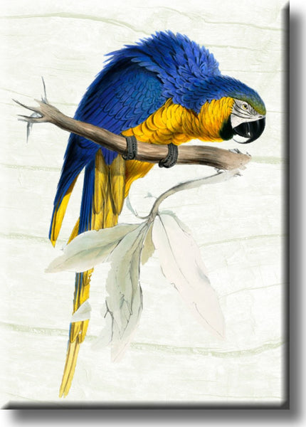 Yellow Blue Parrot Picture on Stretched Canvas, Wall Art Décor, Ready to Hang