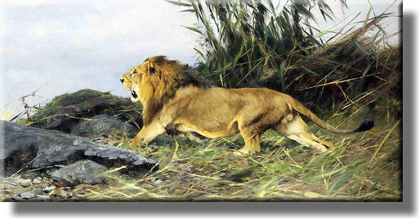Lion Roaring Picture on Stretched Canvas, Wall Art Decor, Ready to Hang!
