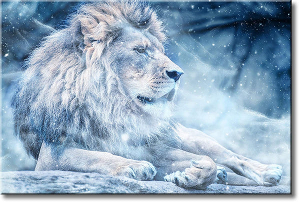 Lion in Winter Picture on Stretched Canvas, Wall Art Décor, Ready to Hang