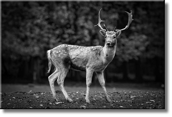 Deer in Nature Black Picture on Stretched Canvas, Wall Art Decor, Ready to Hang