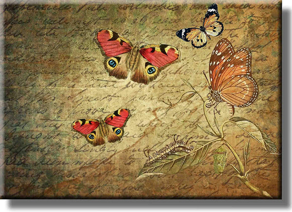 Butterflies Vintage Picture on Stretched Canvas, Wall Art decor, Ready to Hang!