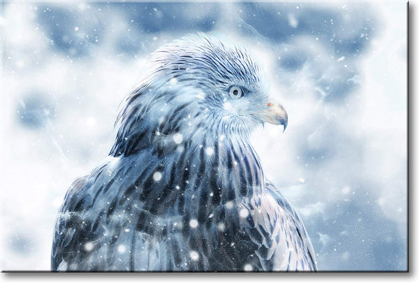 Hawk in Snow Picture on Stretched Canvas, Wall Art Décor, Ready to Hang