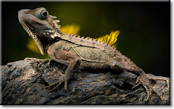 Lizard on a Tree Picture on Stretched Canvas, Wall Art Décor, Ready to Hang