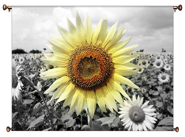 Big Sunflower on a Farm Picture on Canvas Hung on Copper Rod, Ready to Hang, Wall Art Décor