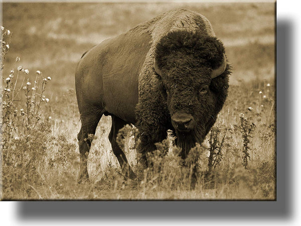 American Buffalo Picture, Made on Stretched Canvas, Wall Art Décor, Ready to Hang!