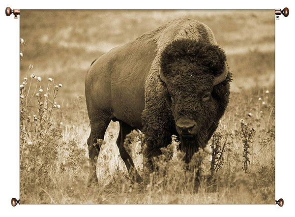 American Buffalo Picture on Canvas Hung on Copper Rod, Ready to Hang, Wall Art Décor